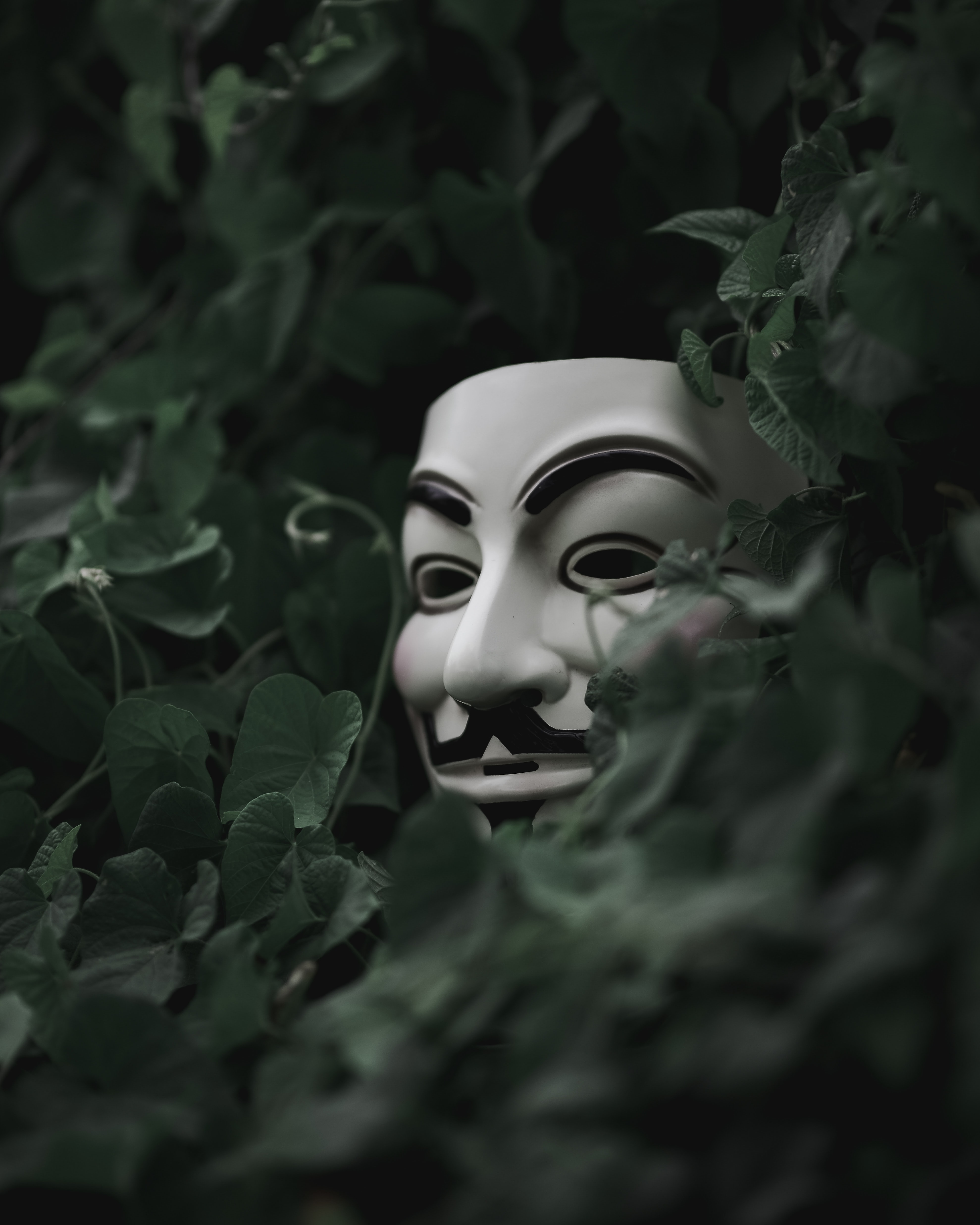 selective focus short of Guy Fawkes mask hiding behind plants