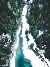 aerial photography of pine trees near river