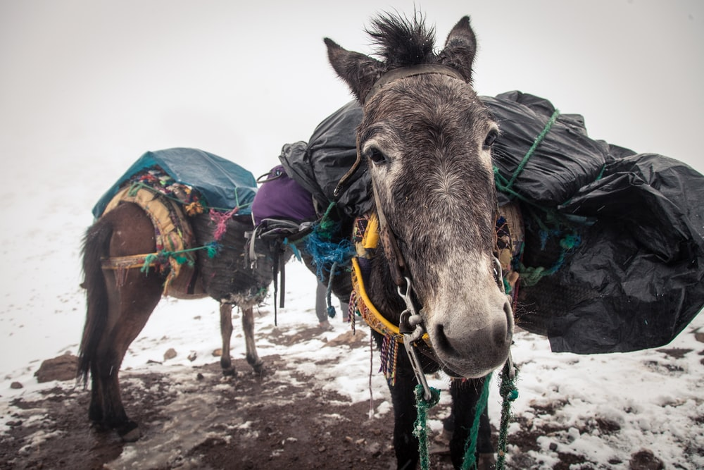 100 donkey pictures download free images on unsplash
