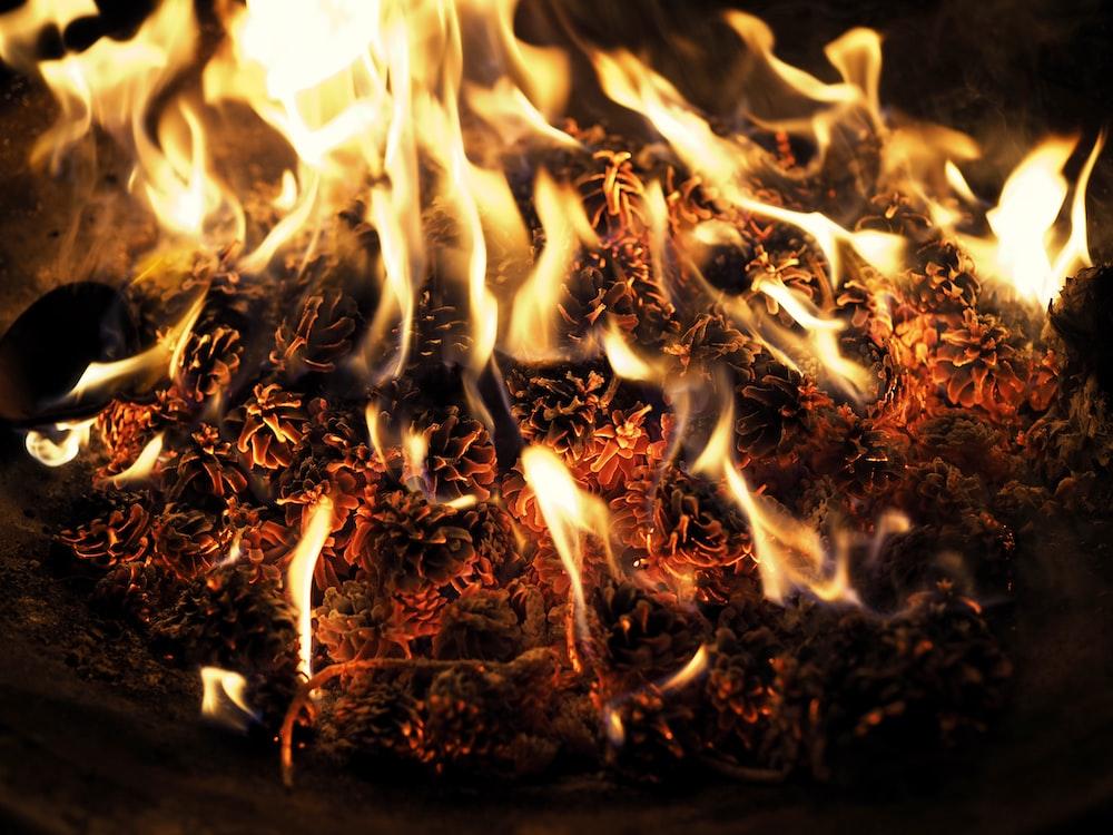 time lapse photography of burning wood