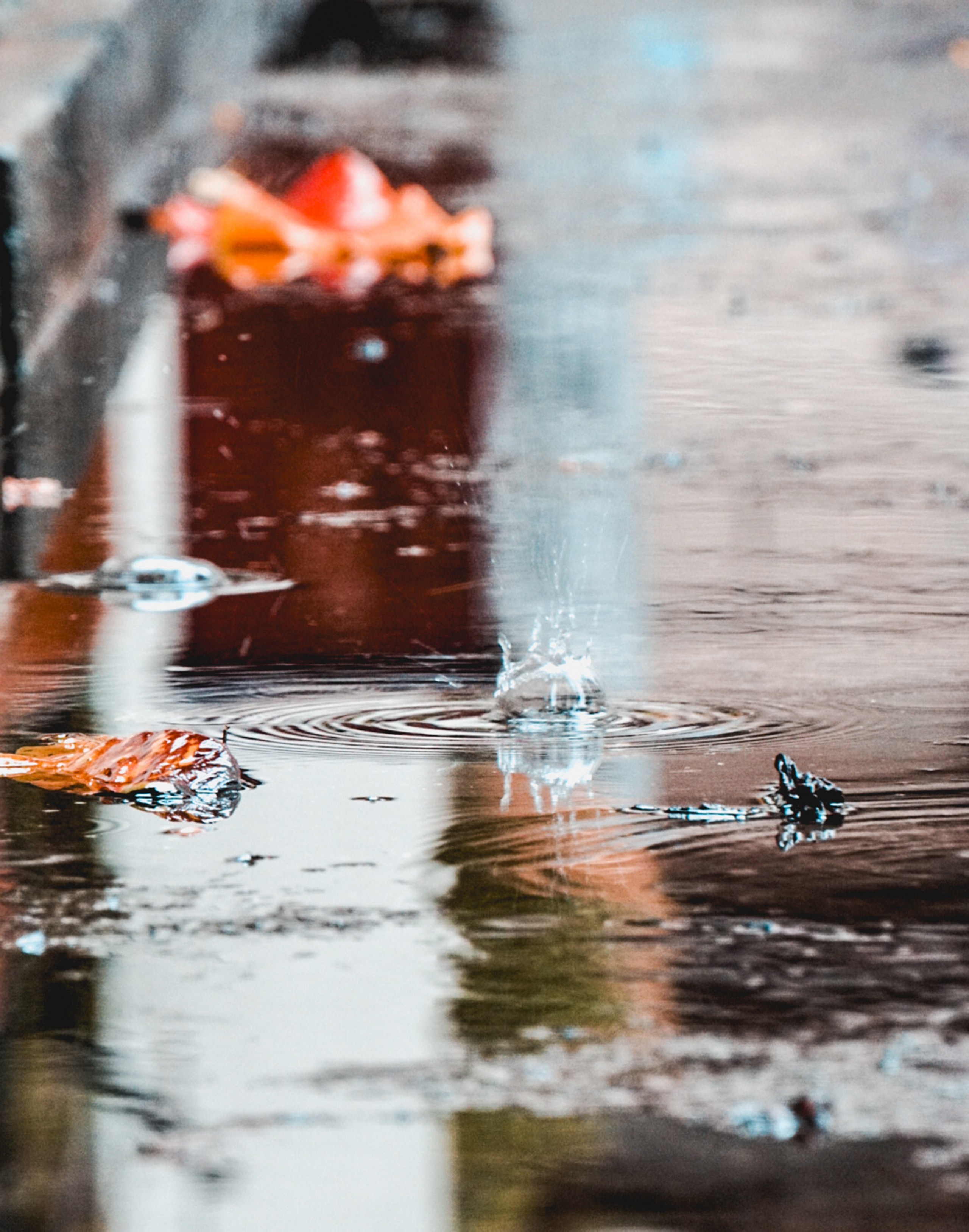selective focus photography of drops on puddle