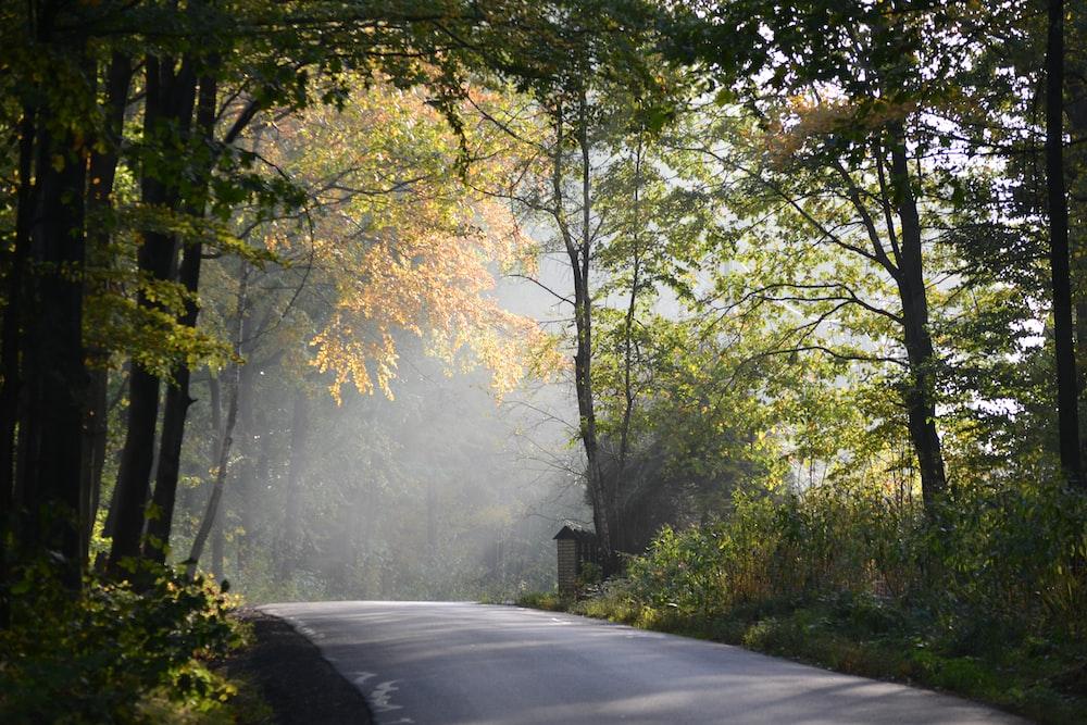 road surrounding trees
