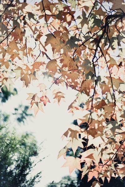 worm's-eye-view of beige leaves