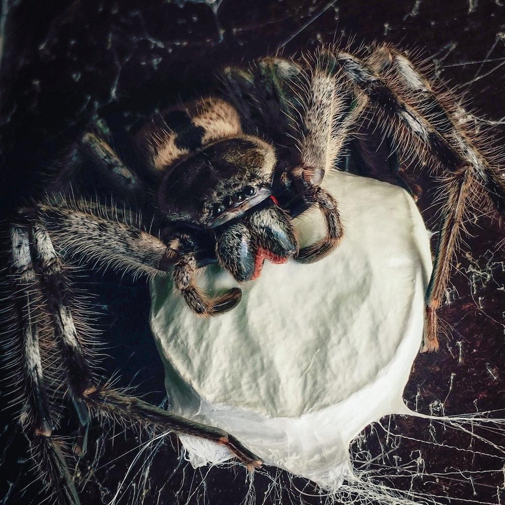 gray spider perch on a white web