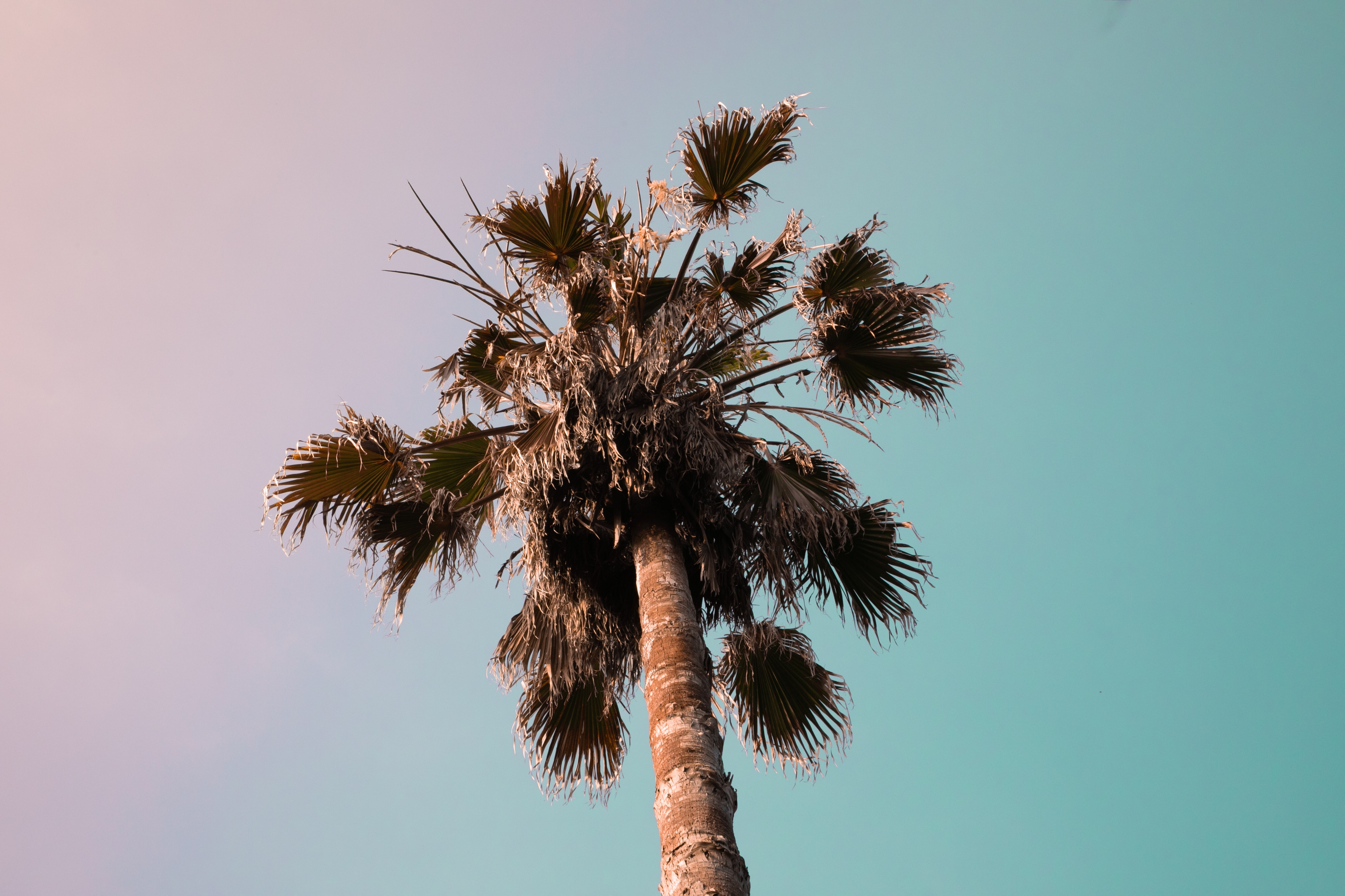 low-angle photography of palm plant