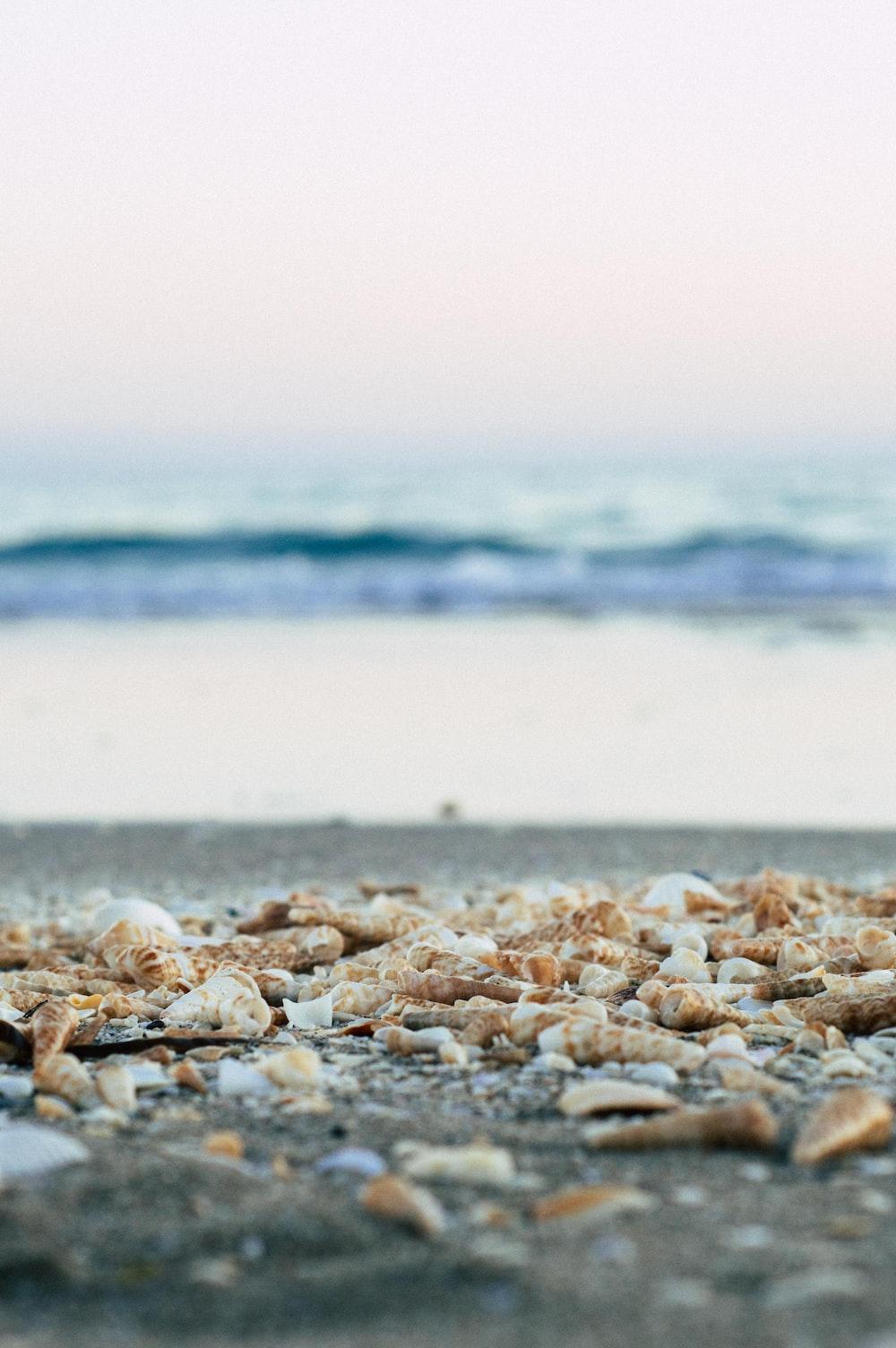 selective focus photography of seashells at seashore