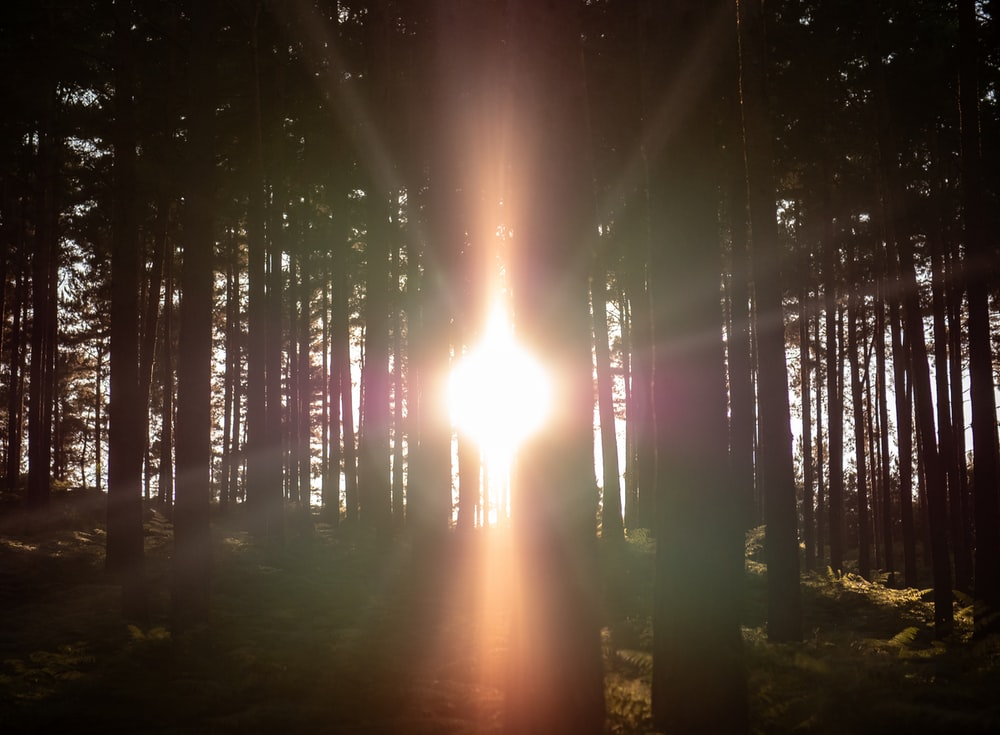 sunlight passing through forest trees