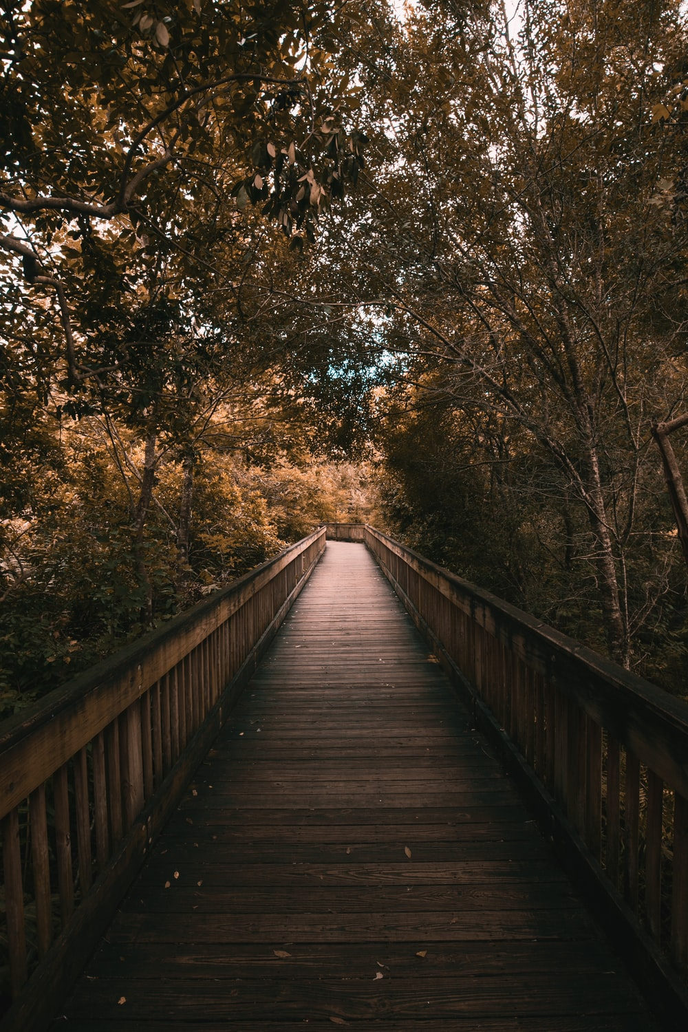 wooden bridge surrounded by trees
