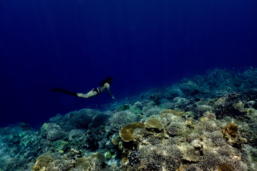 woman diving near coral reefs in body water