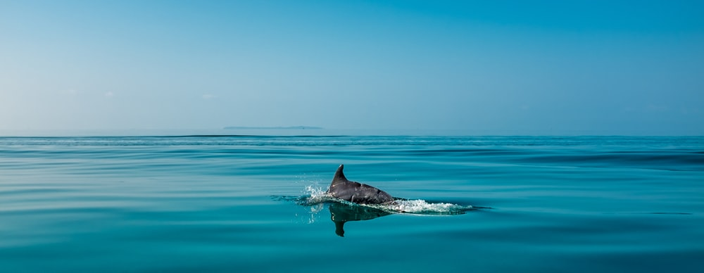 time lapse photography of dolphin on water