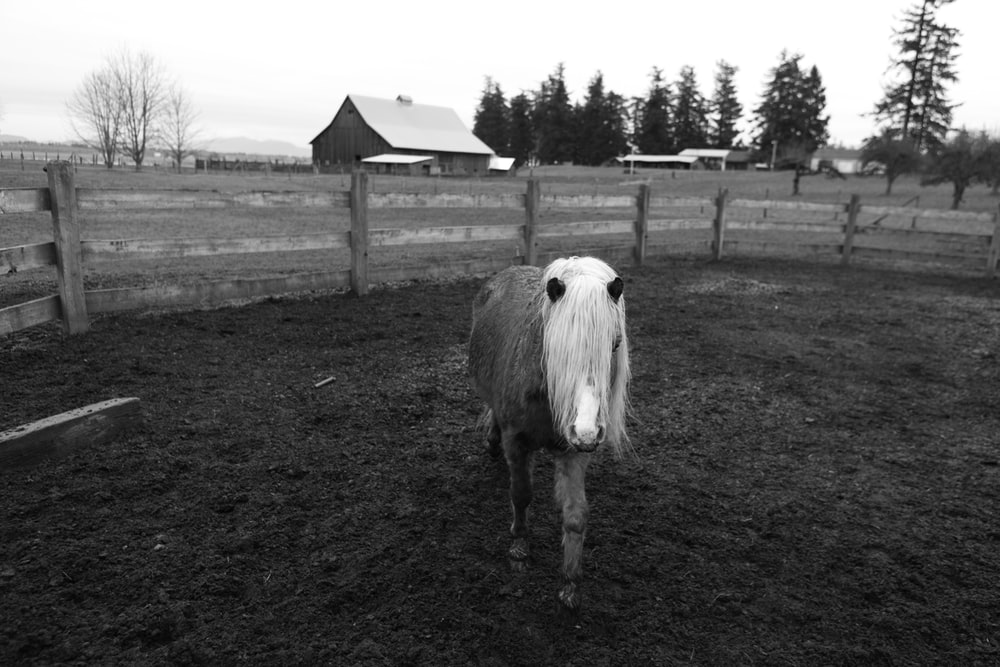 grayscale photo of pony in ranch