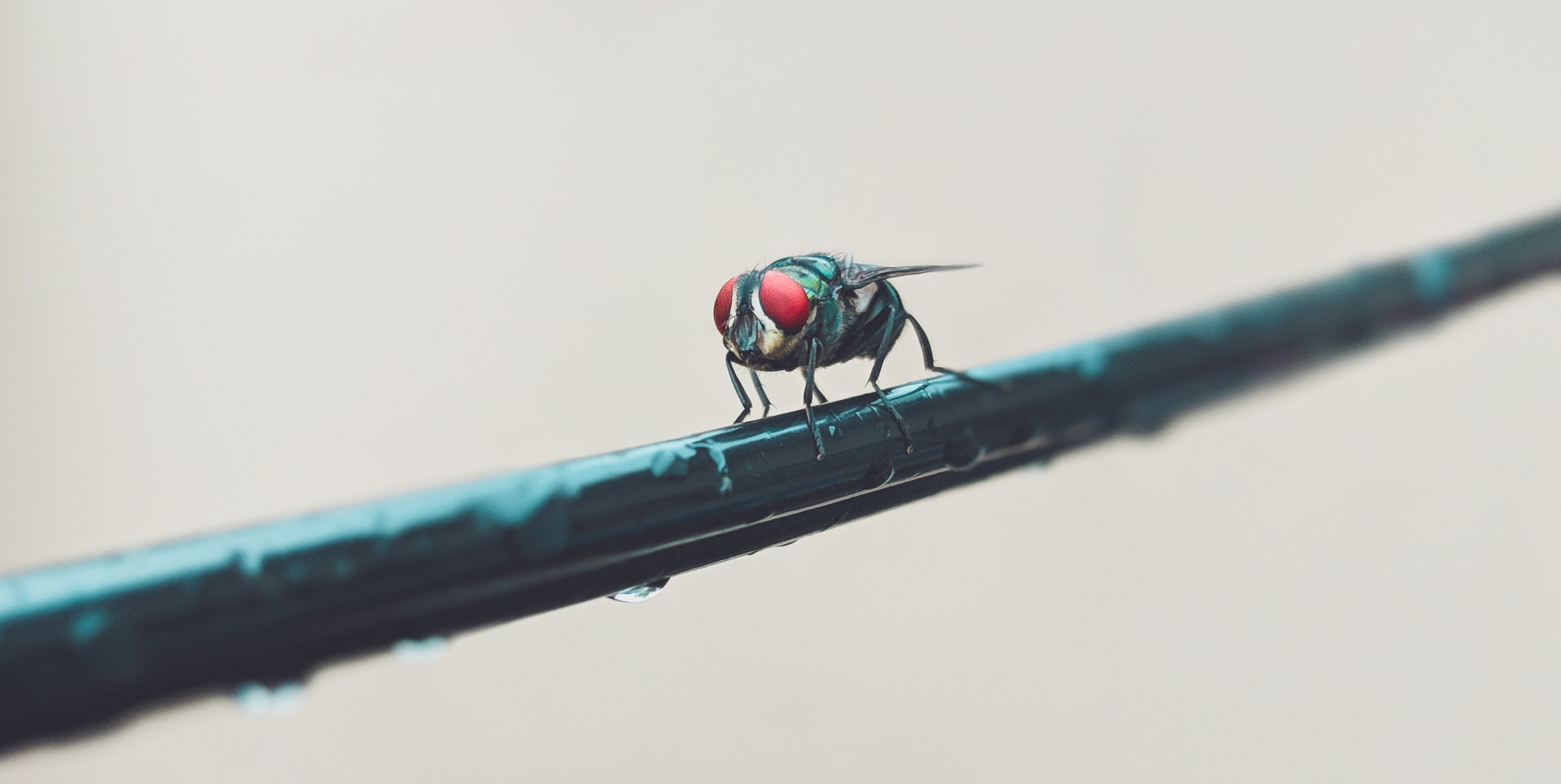 selective focus photo of a fly on stem