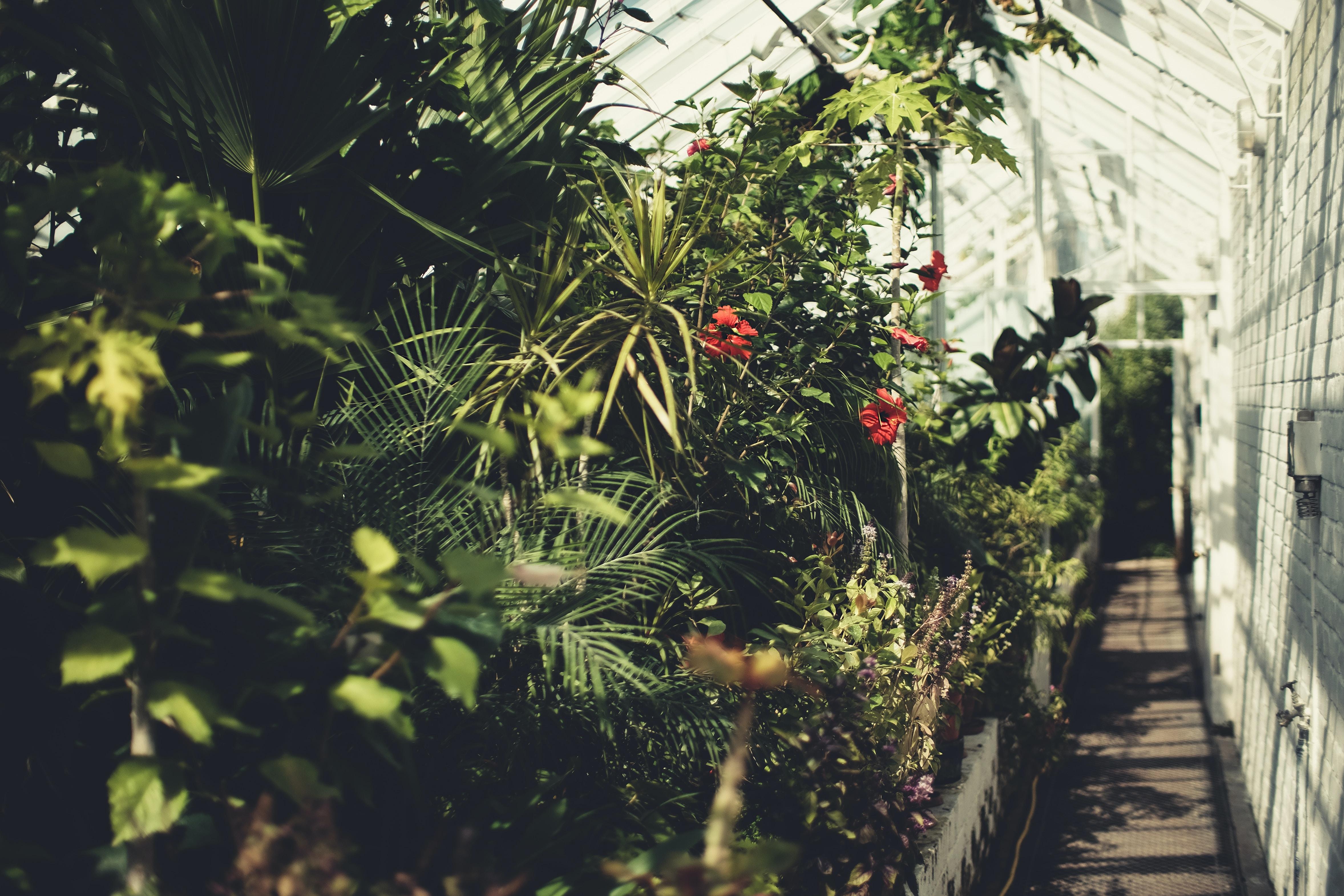 plants inside greenhouse
