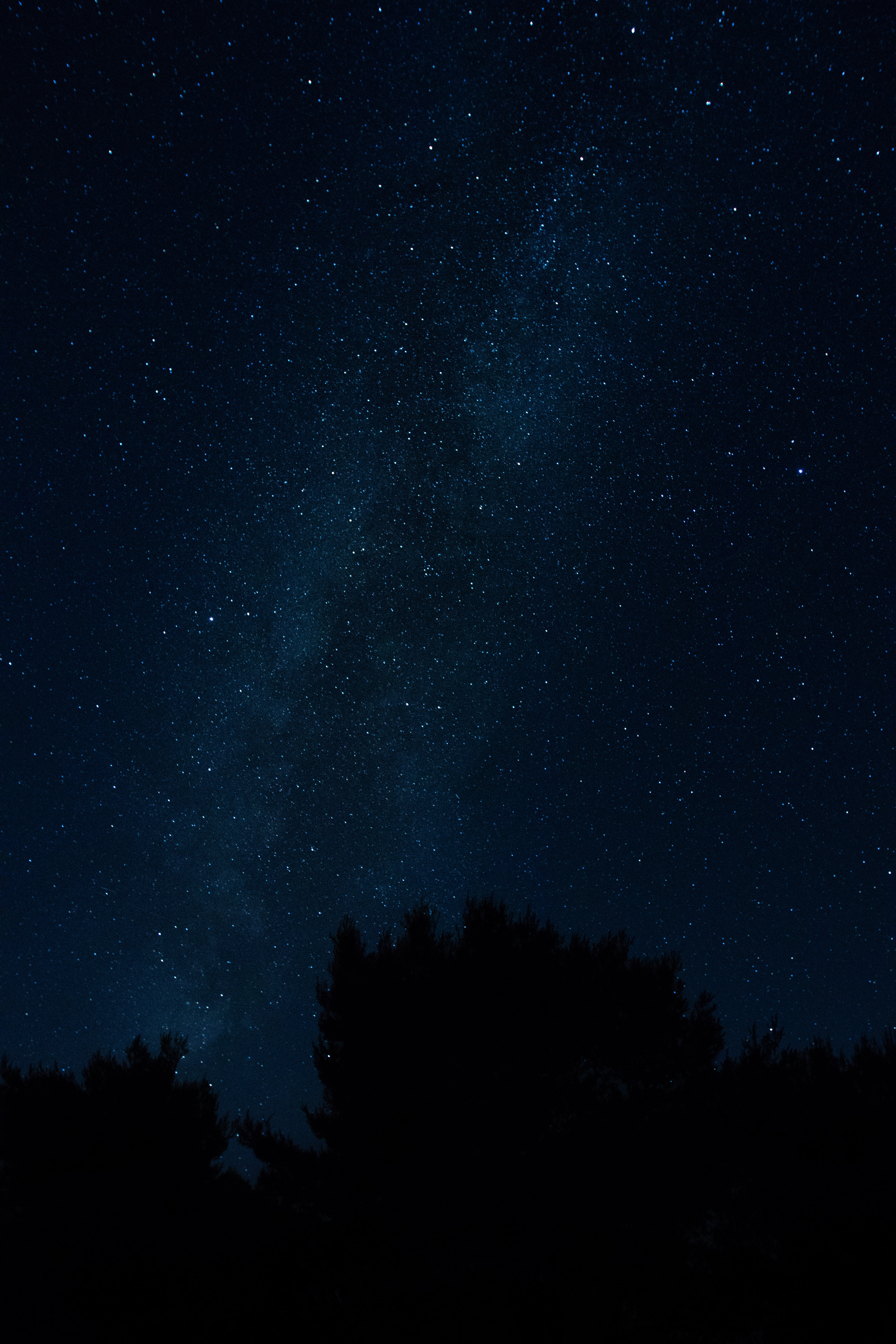 stars at the sky during night time
