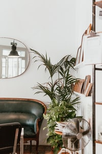 gray fan beside indoor green plants