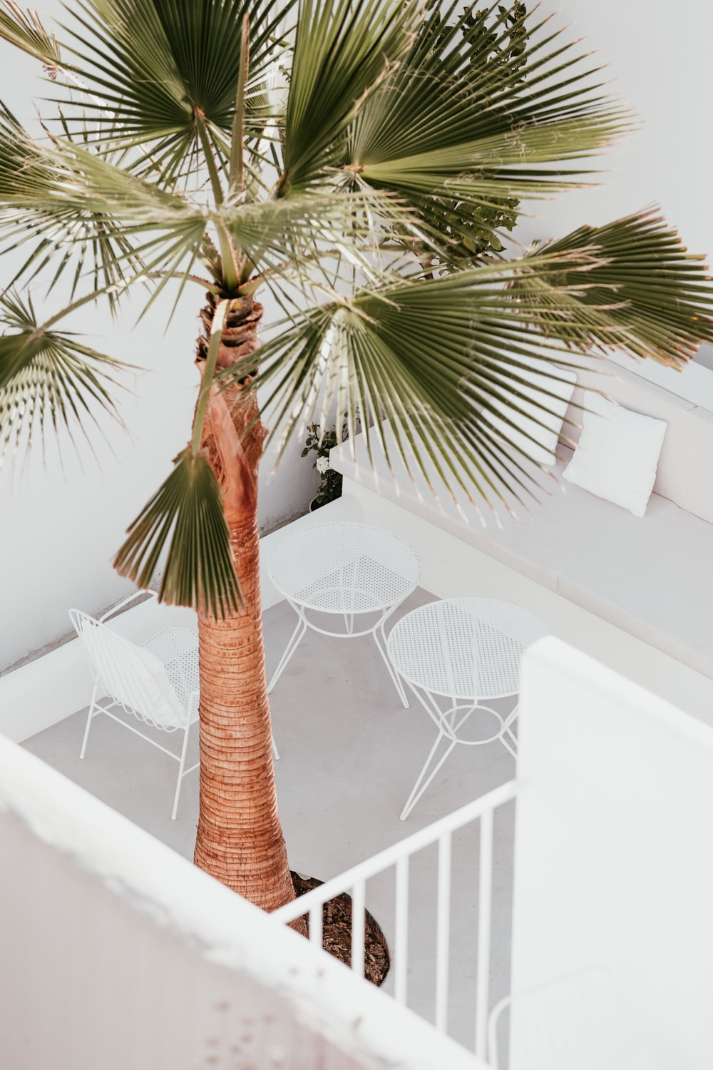 green leafed tree inside house