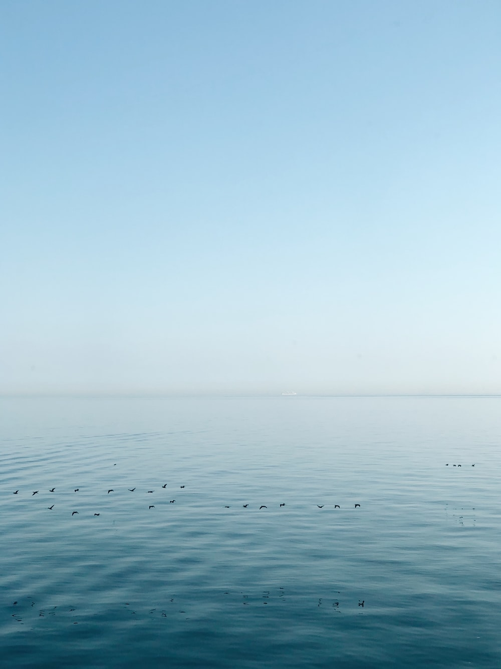 birds flying above calm ocean