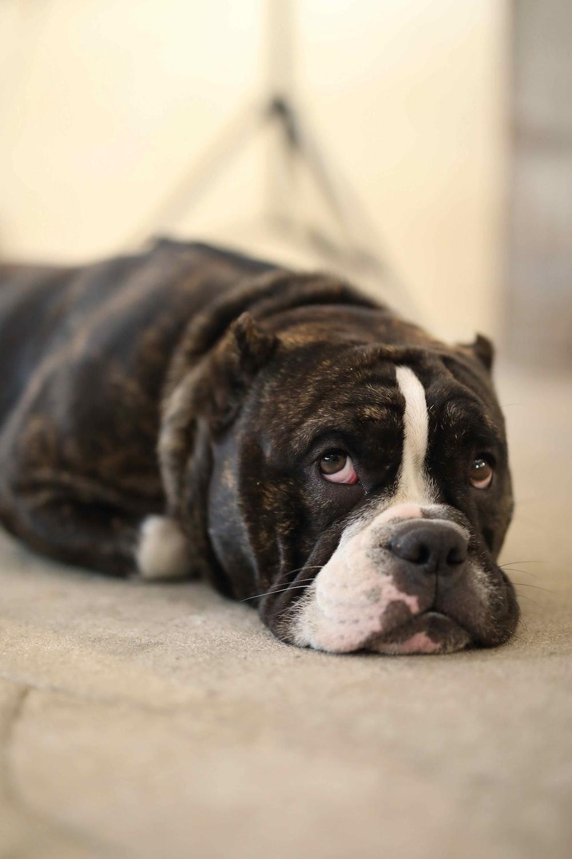 dog lying on beige surface