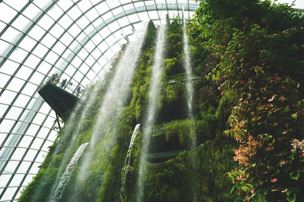 waterfalls near plants