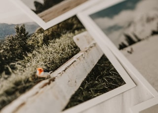 selective focus photography of photos