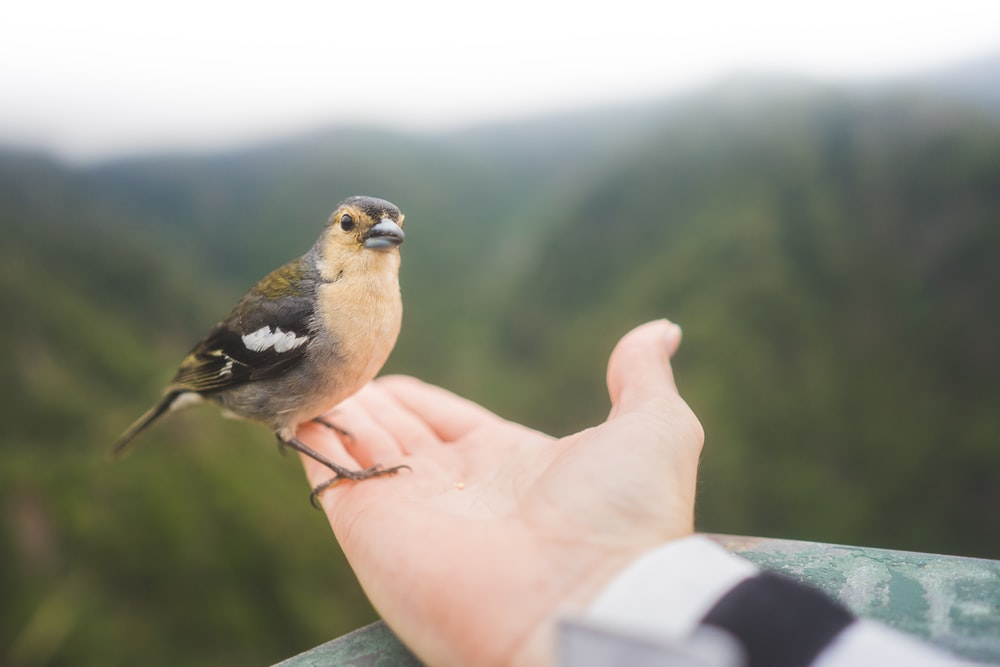 brown bird standing on person's palm