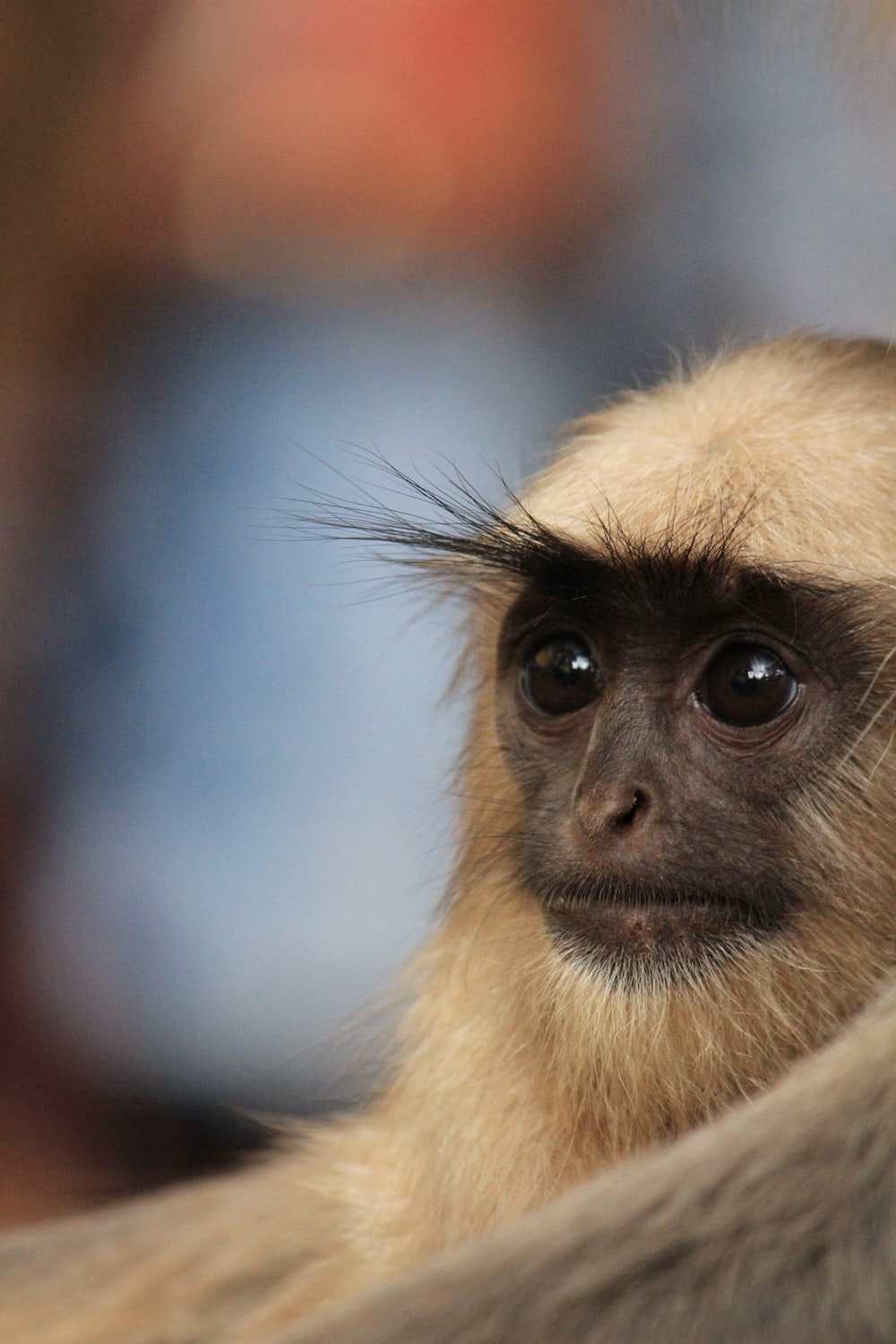 selective focus photography of white primate