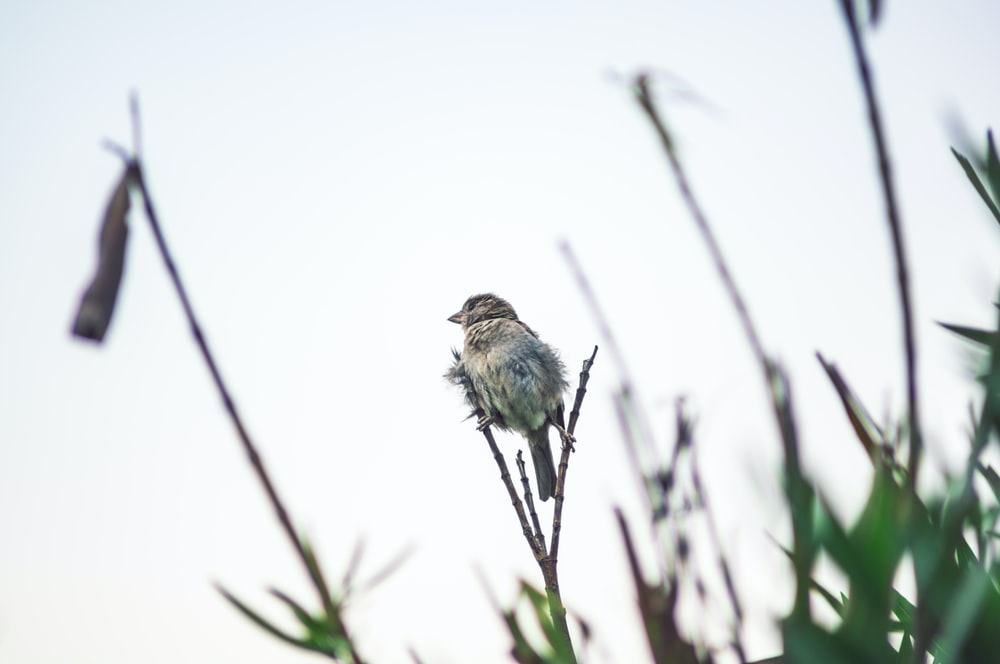 bird on stem