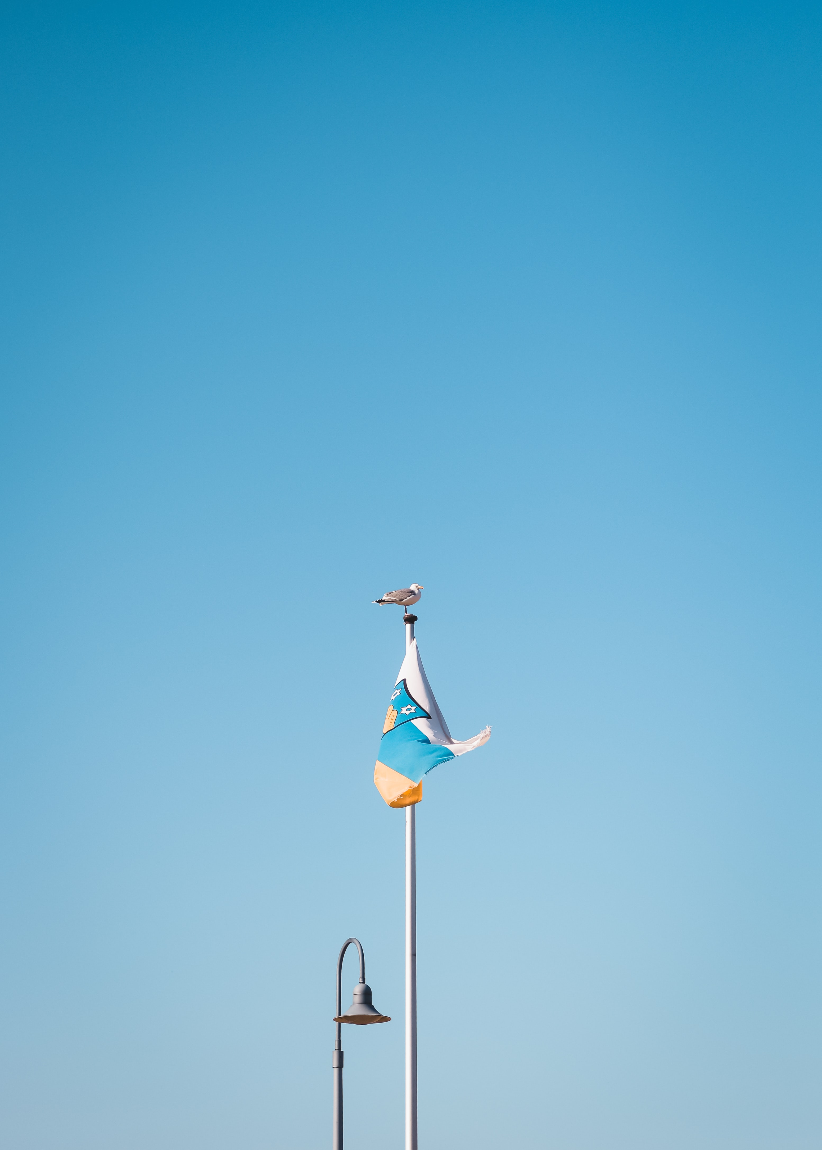 bird perched on flag pole with flag during day