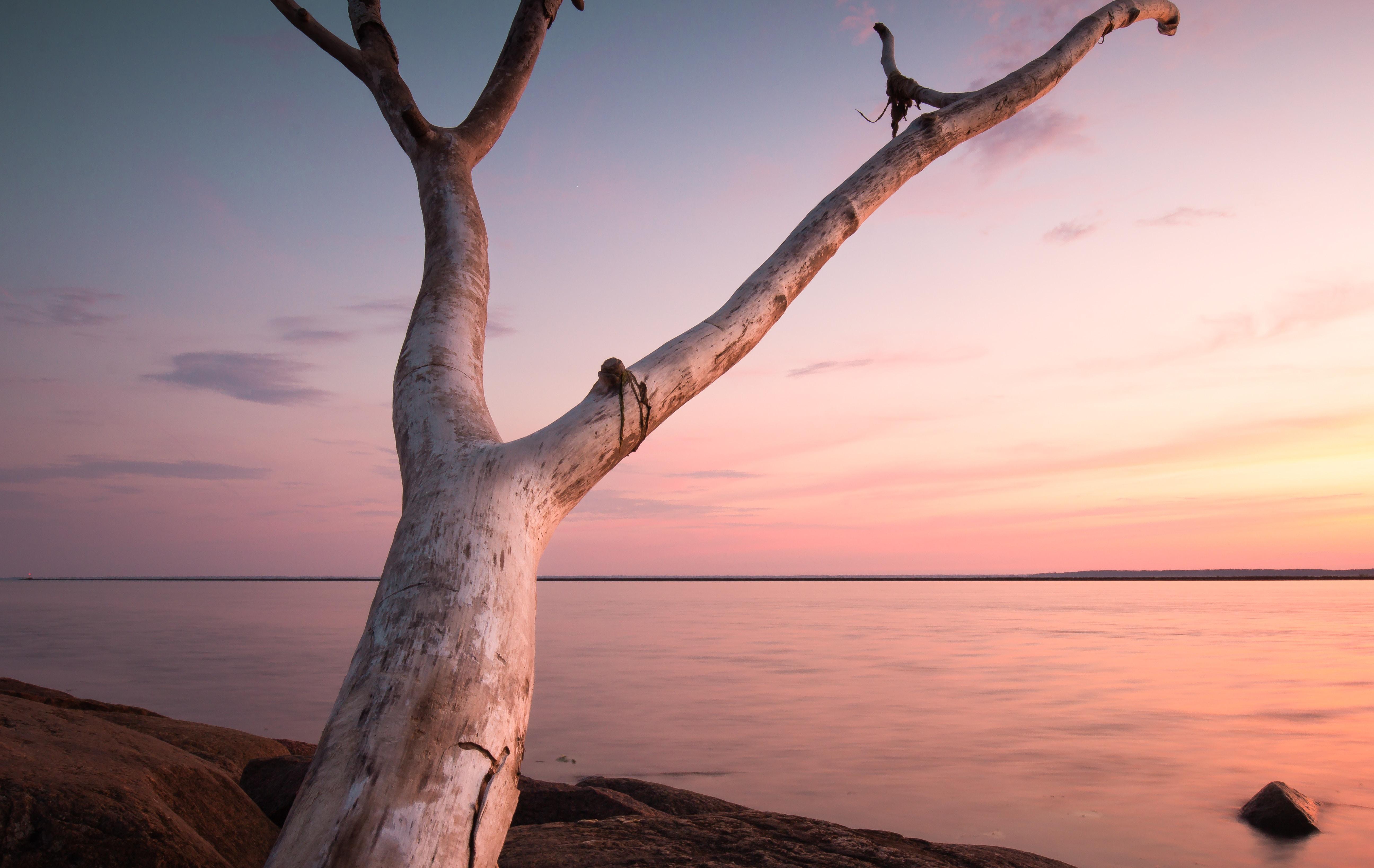tree trunk near body of water