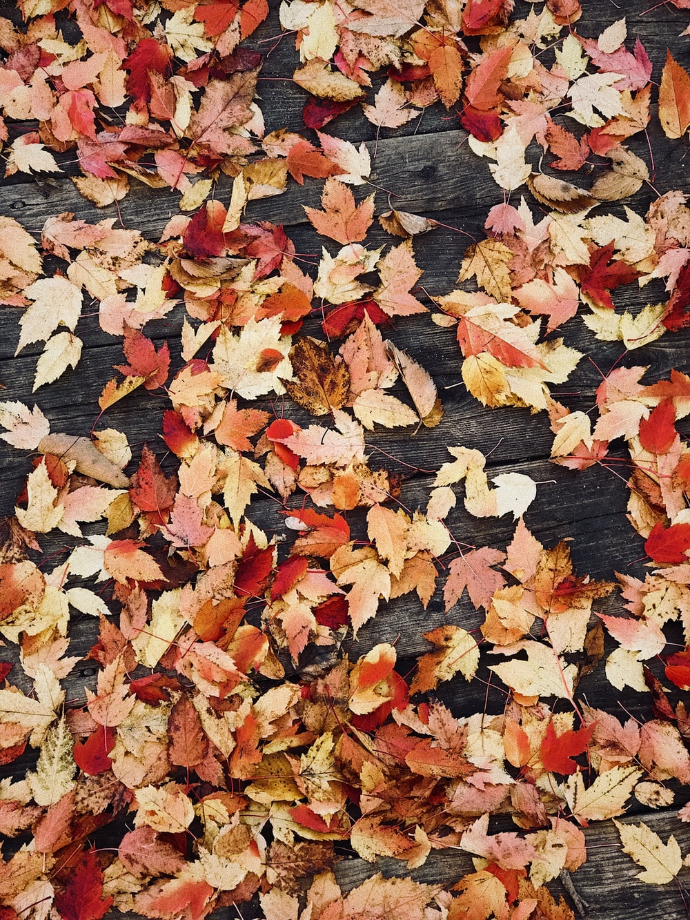 dried leaves on wooden surface