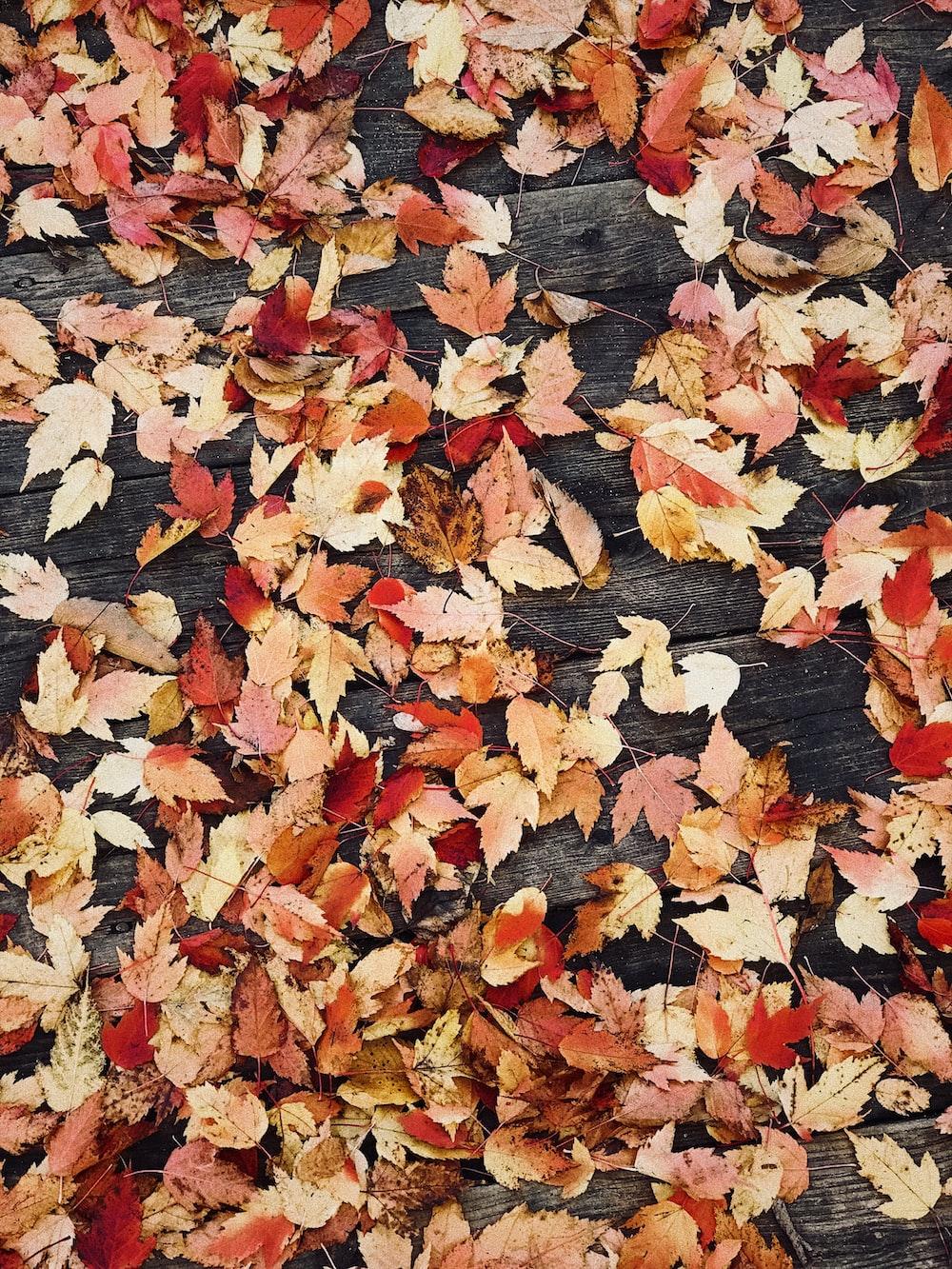 autumn images download free images on unsplash