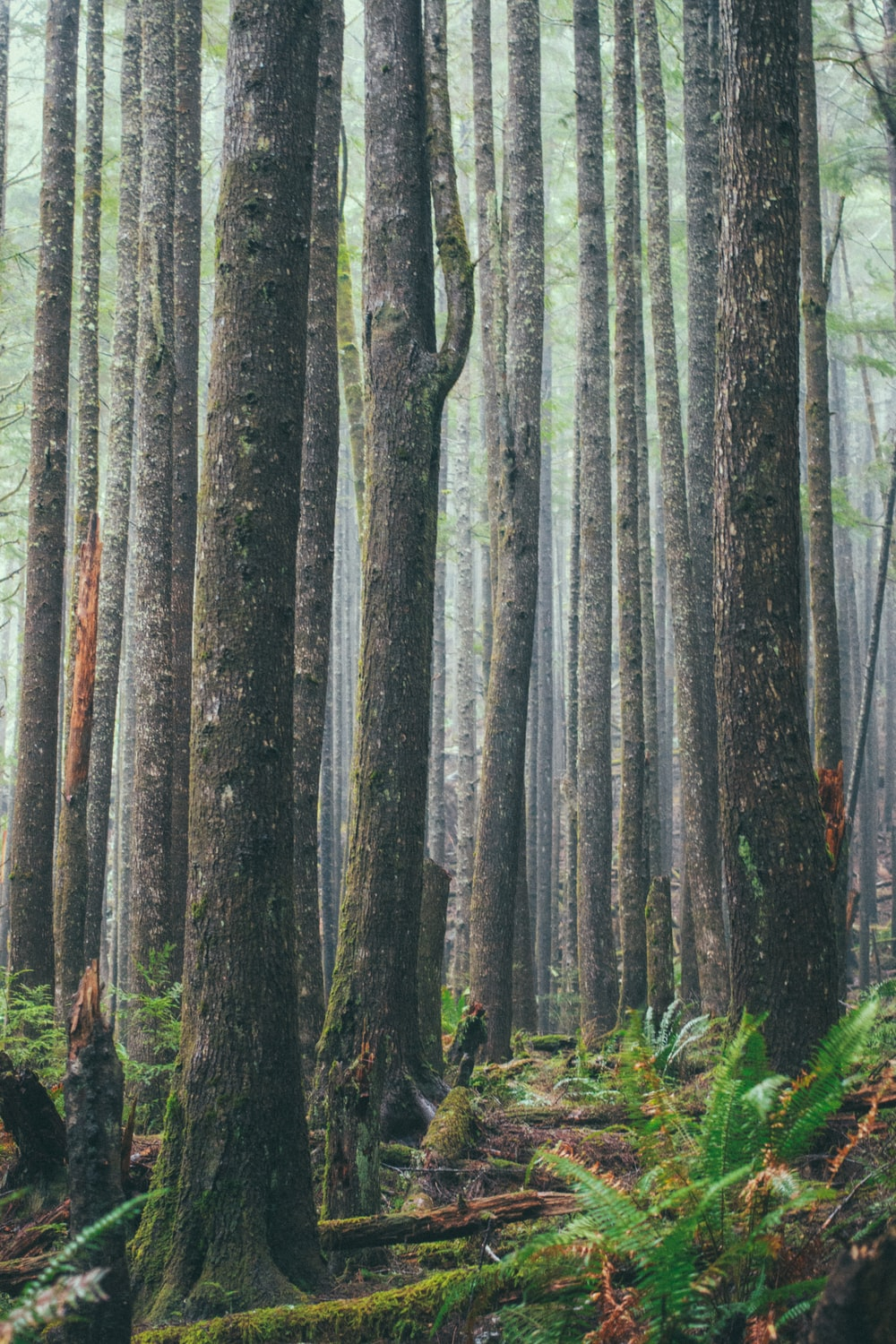 trees on forest