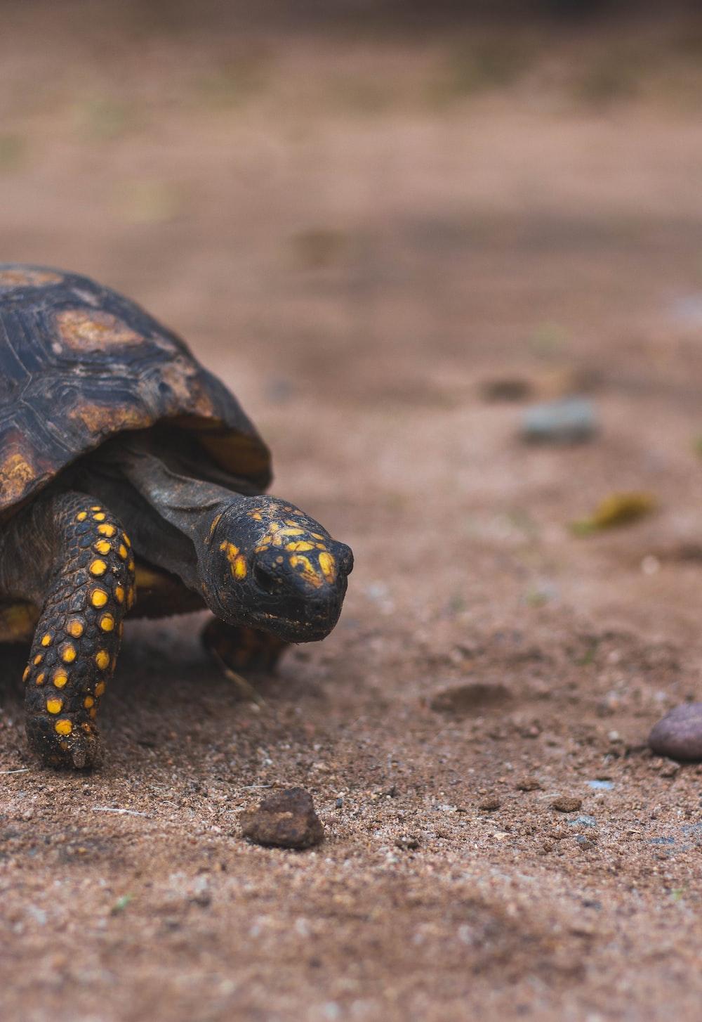 shallow focus photo of black turtle