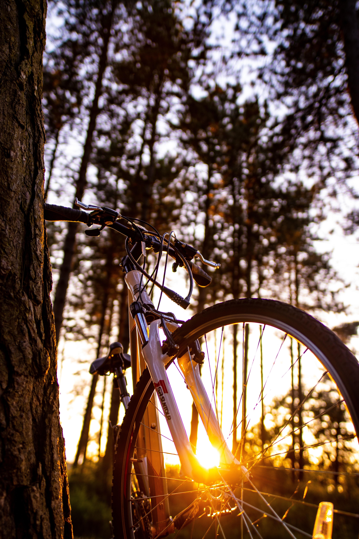 white hardtail bike on tree branch