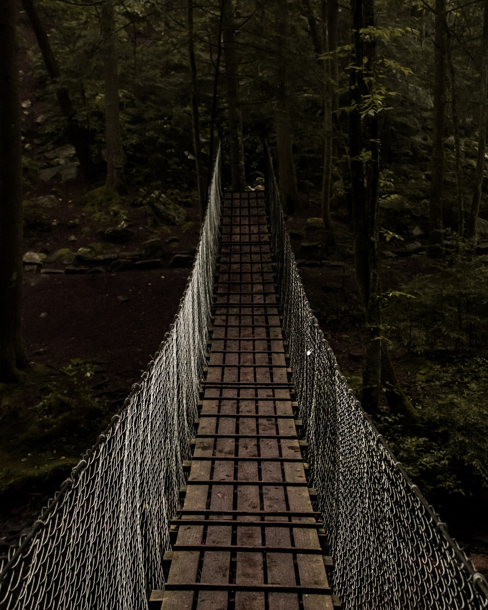 bridge towards forest
