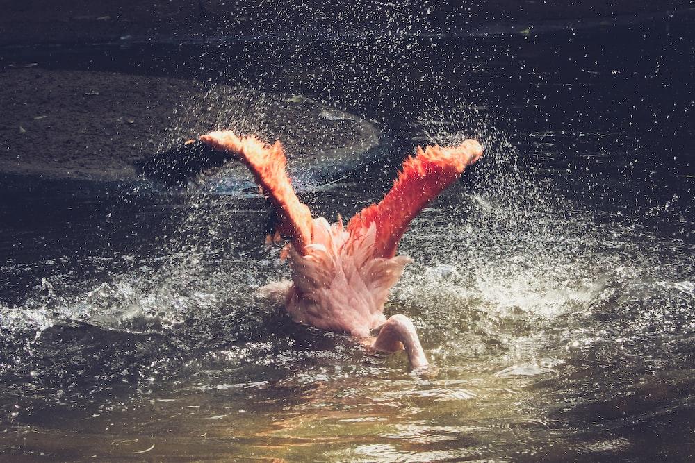 bird swim on body of water