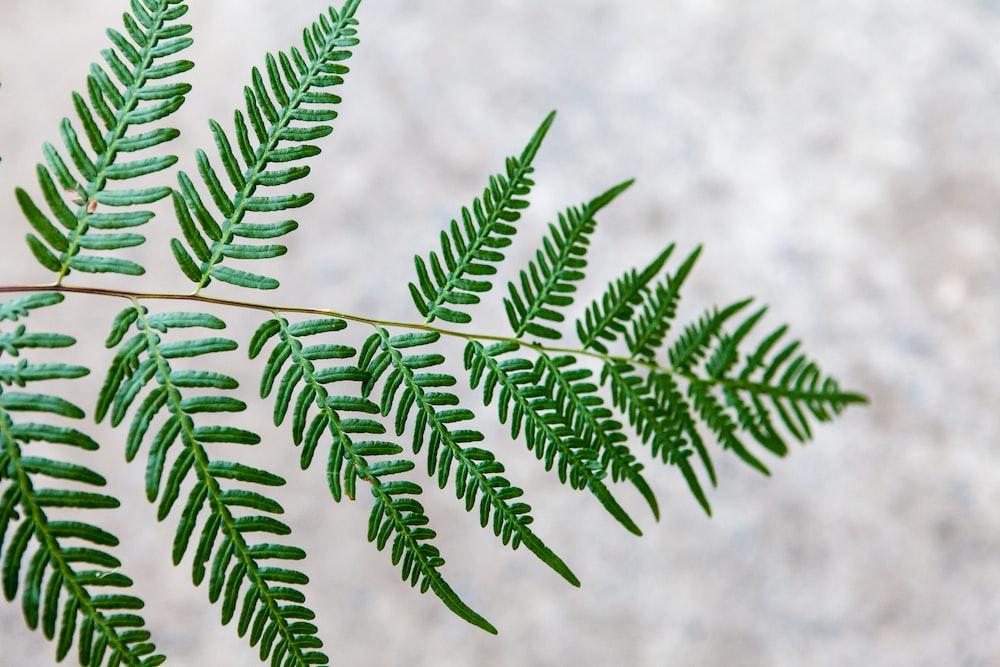 selective focus photo of fern leaf