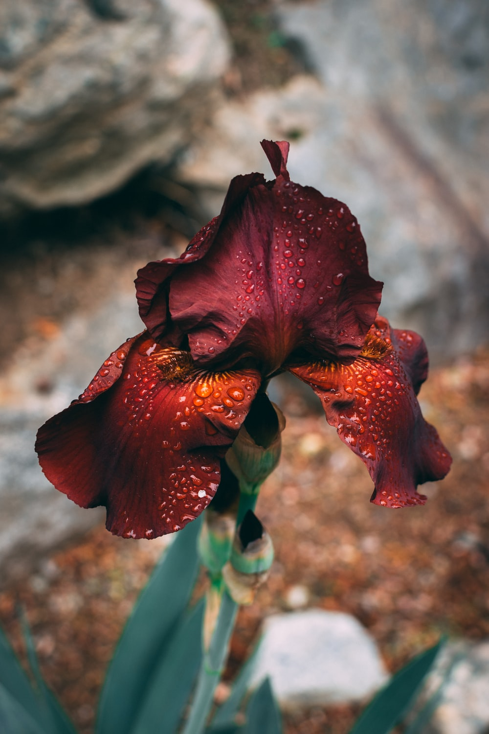 red-petaled flower