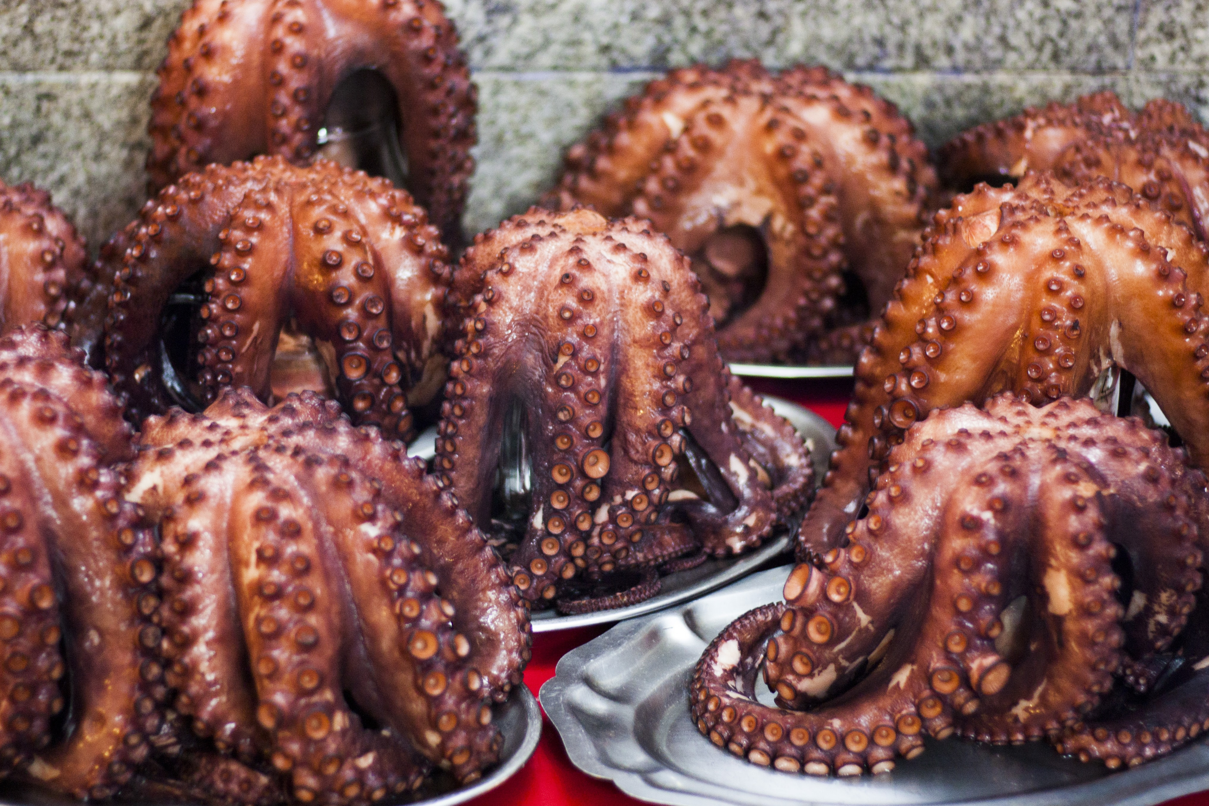 grilled octopus dishes