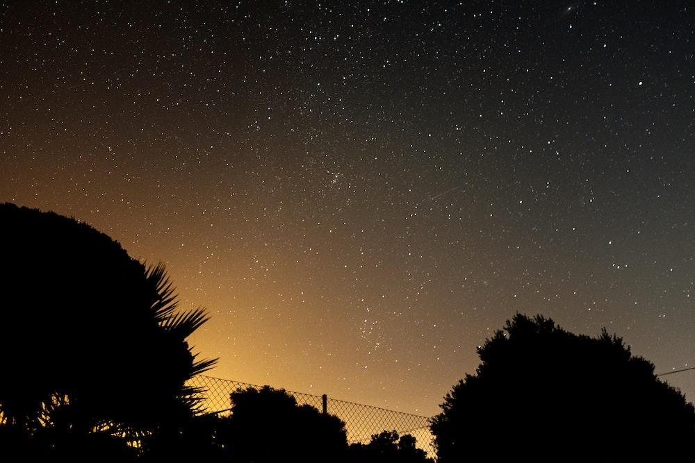 silhouette trees under night sky
