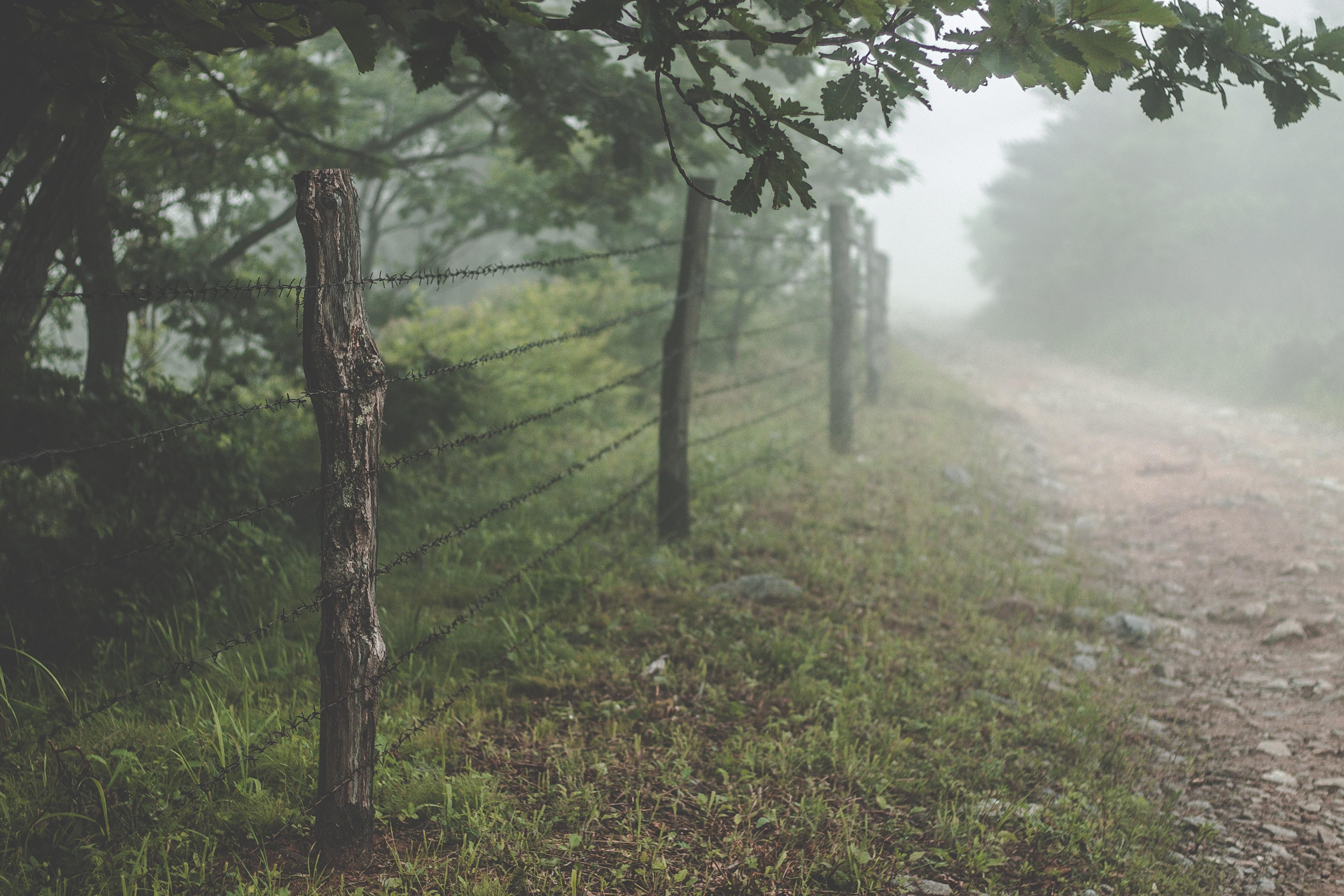landscape photo of foggy trees