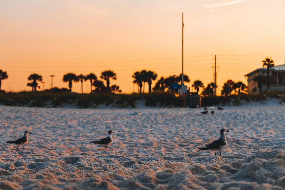 three birds on sand