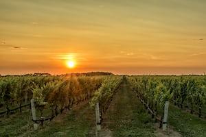 4655. Bor,szőlő, borászatok