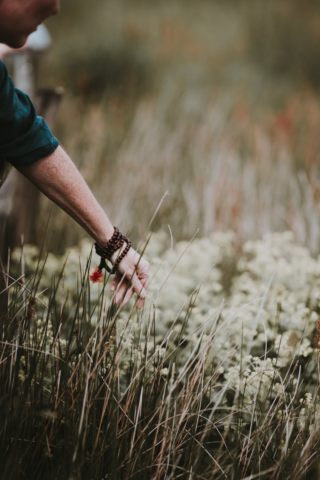 Hand reaching out, touching the long grass