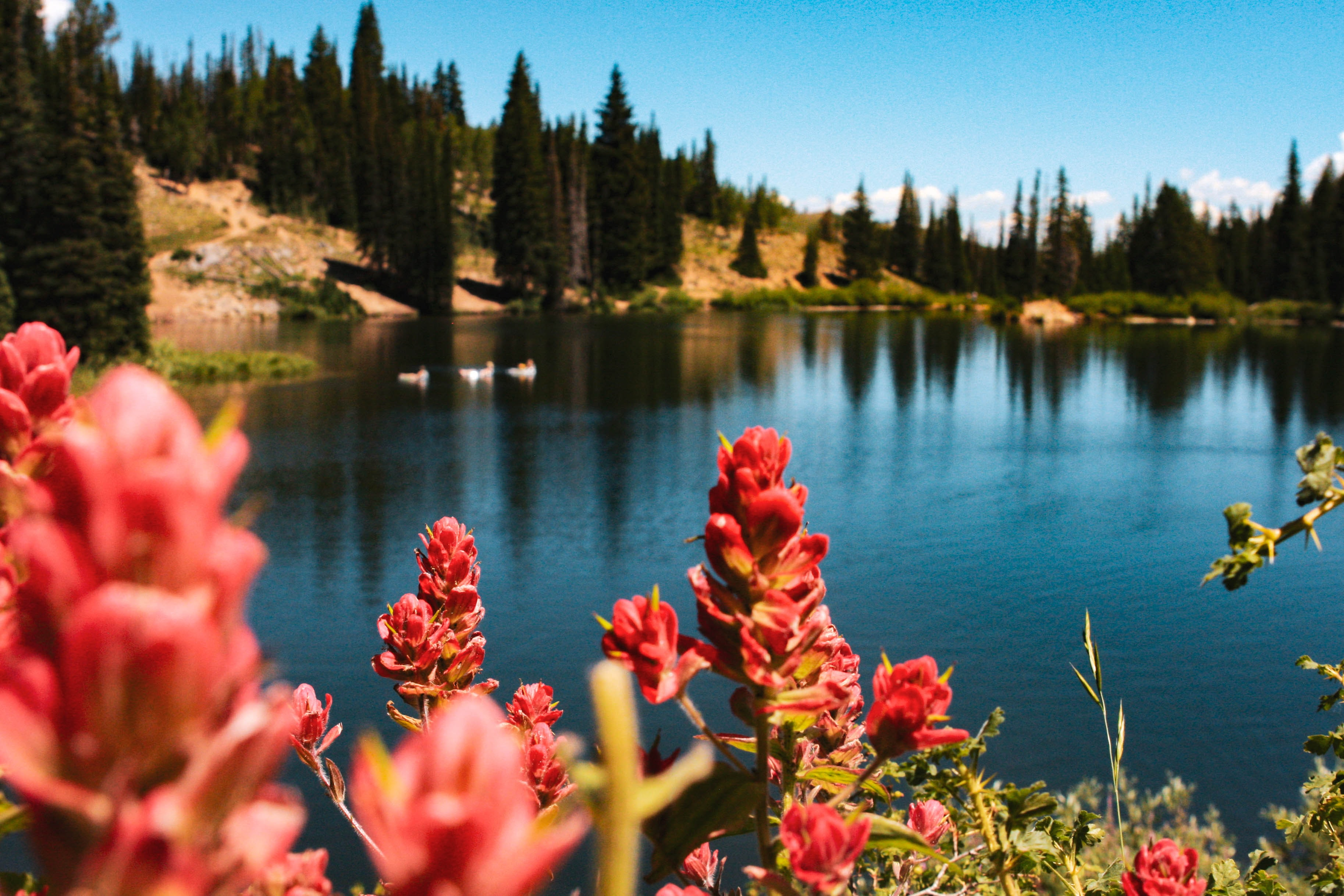 person showing red flowers and body of water