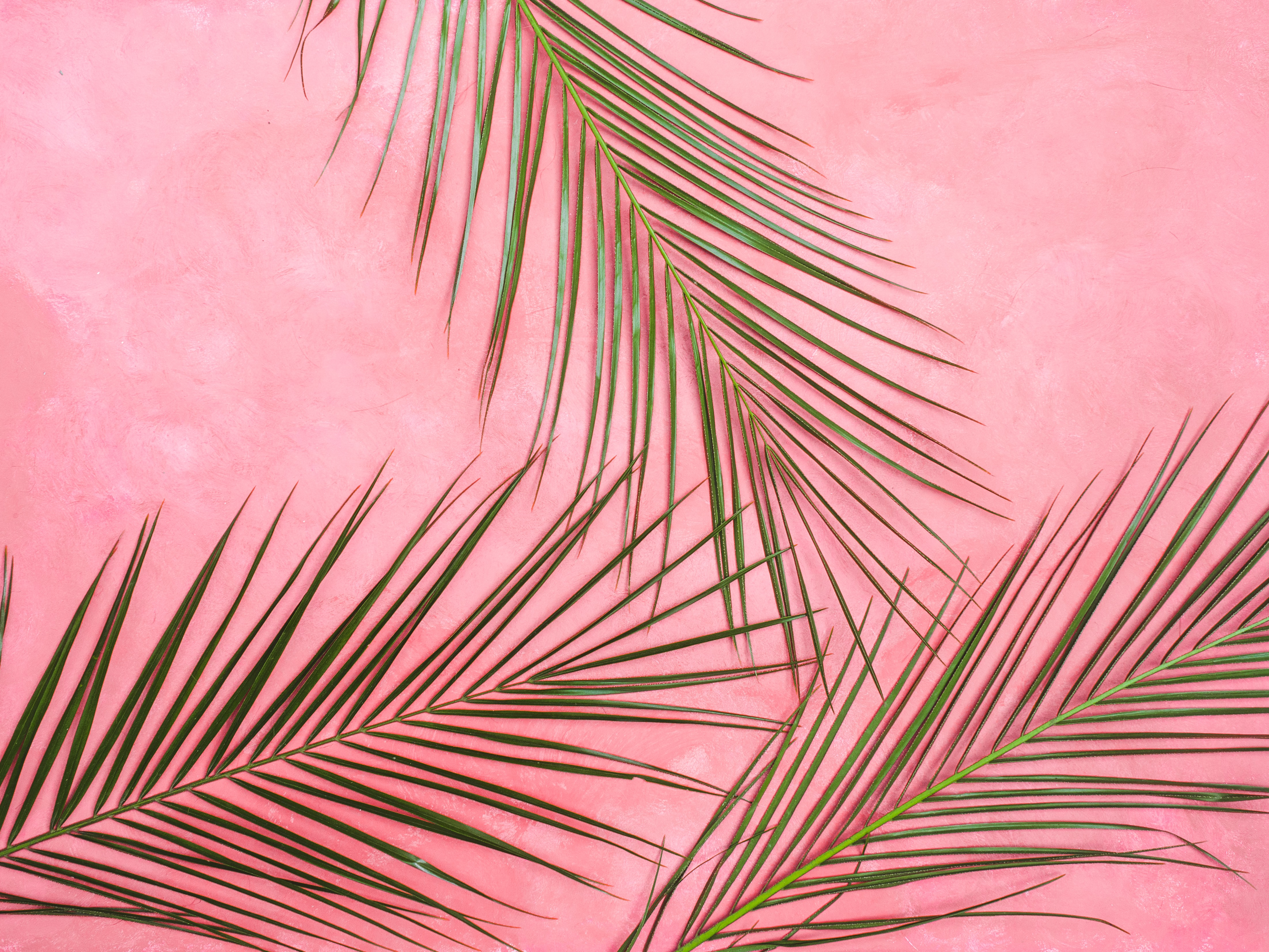 green palm leaves on pink surface