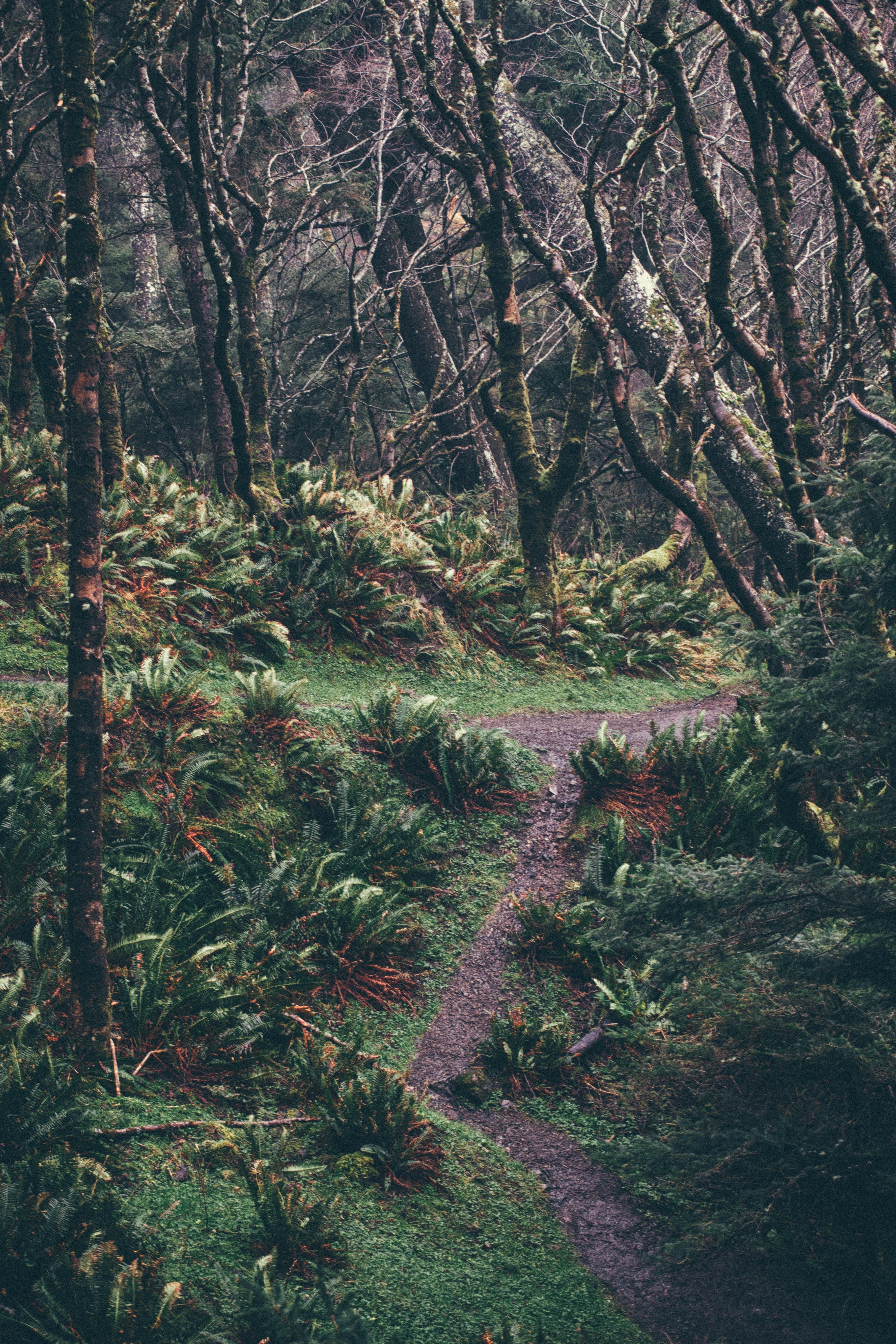 green leaf bush lined dirt road at daytime
