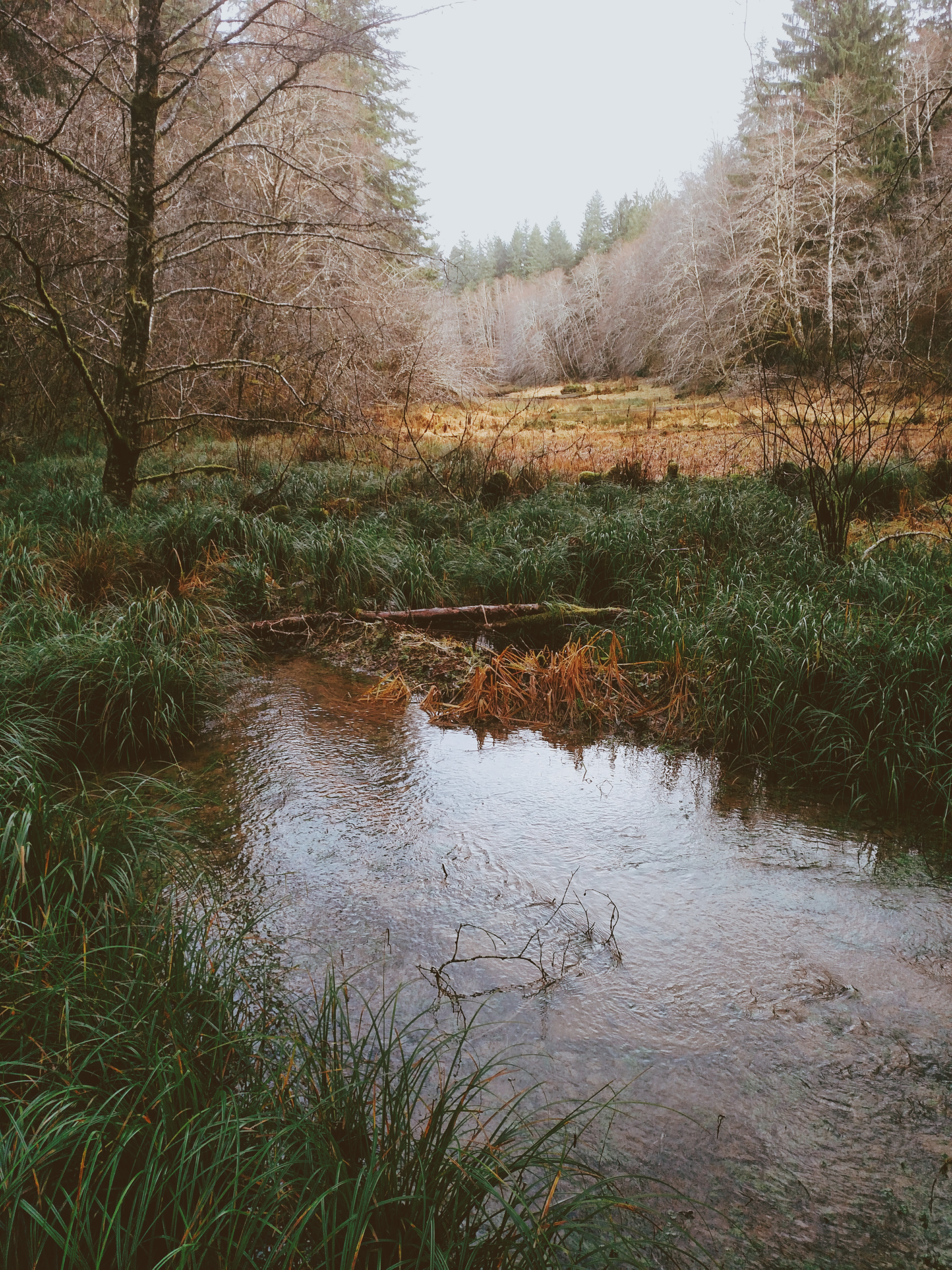 body of water near withered trees