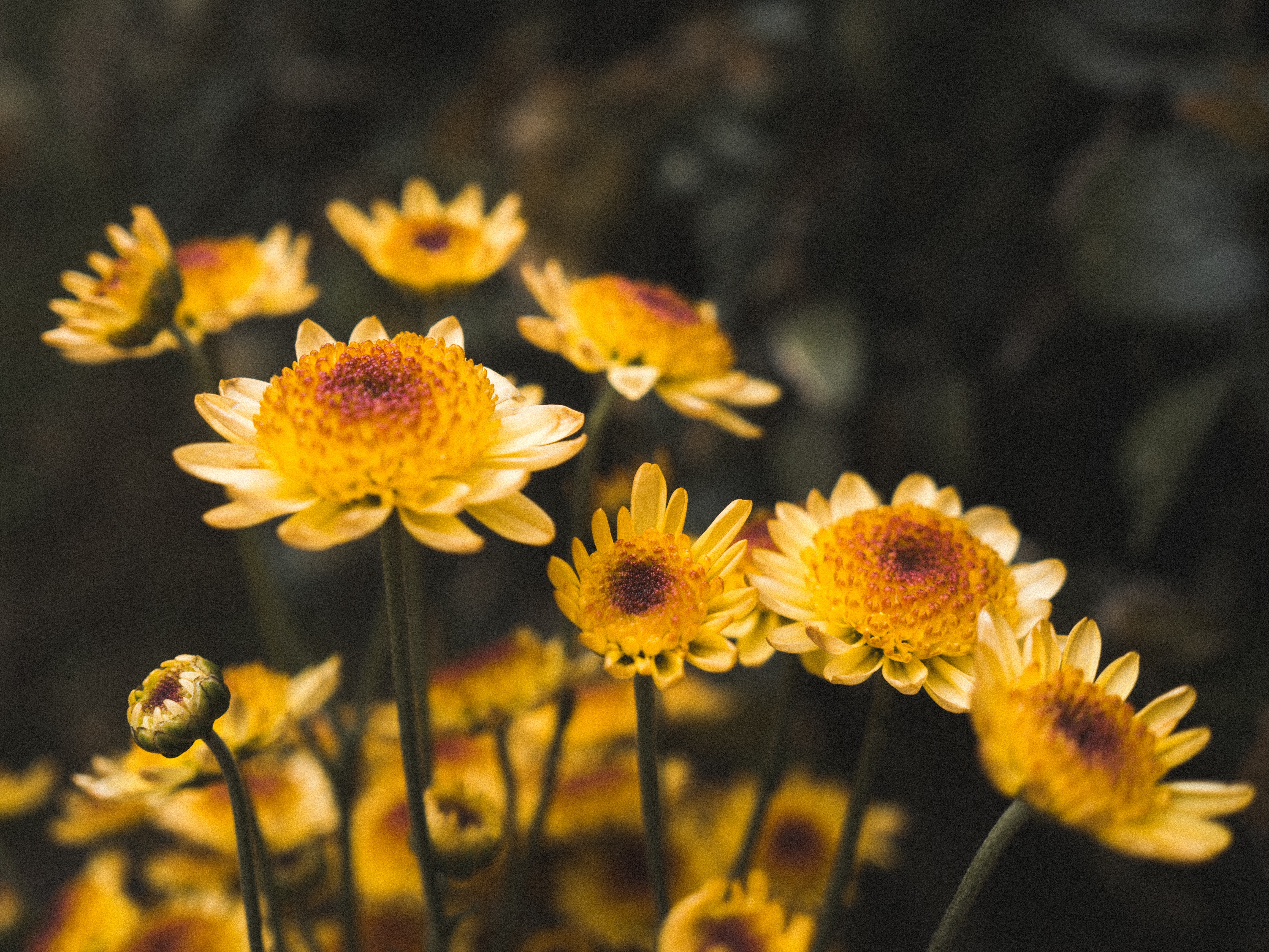 yellow petaled flowers in closeup photography