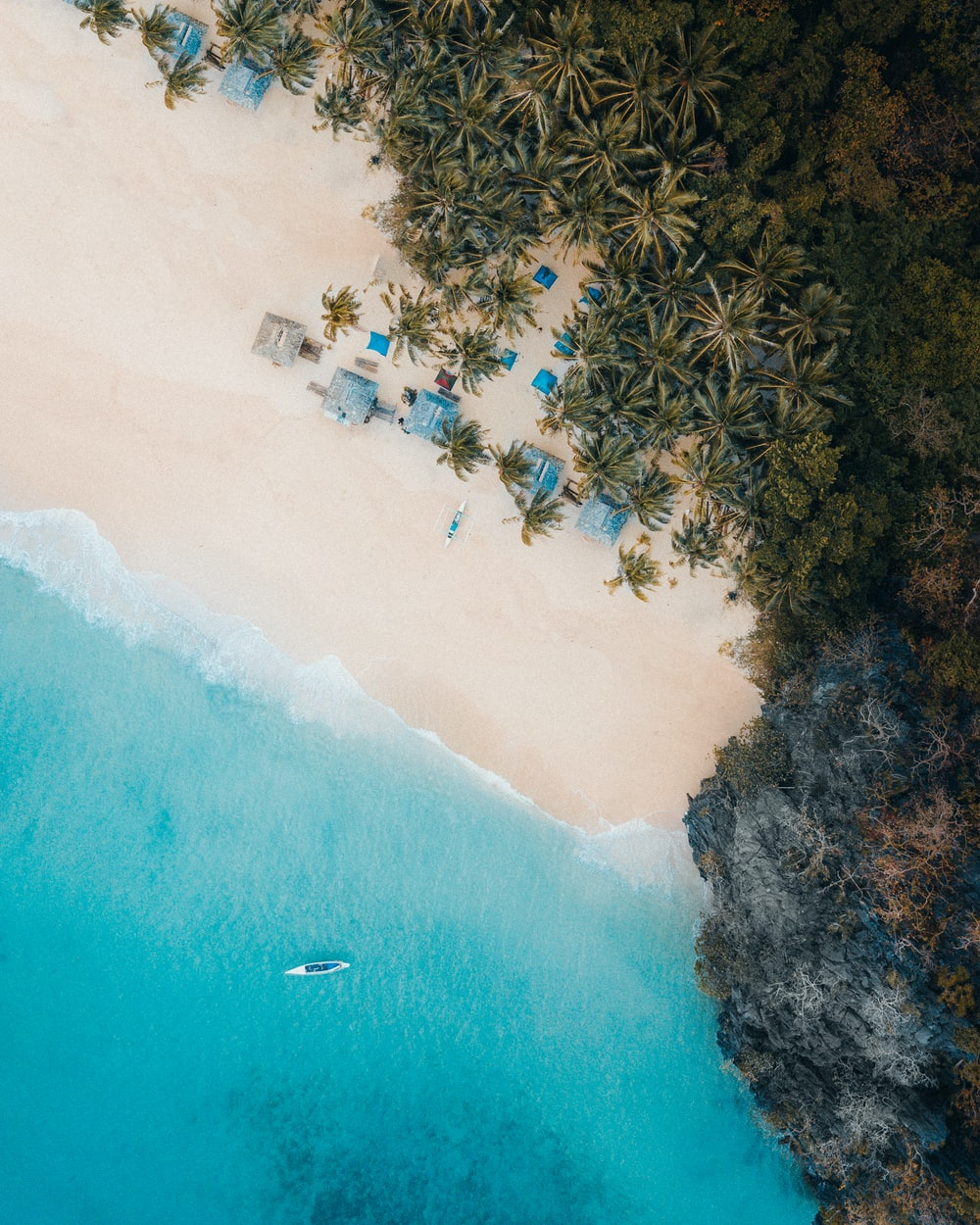 aerial view of palm trees